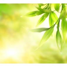Zapach do mydełek Green Vitality 10ml