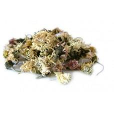 STOKROTKA kwiat naturalny susz